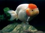 منوعة للأسماك