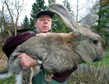 اكبر ارنب بالعالم  25975_01244762157
