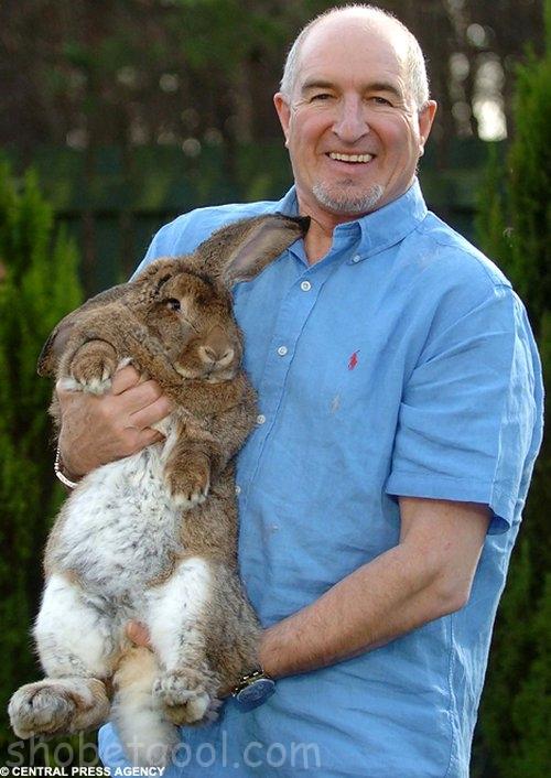 اكبر ارنب بالعالم  25975_01244762368
