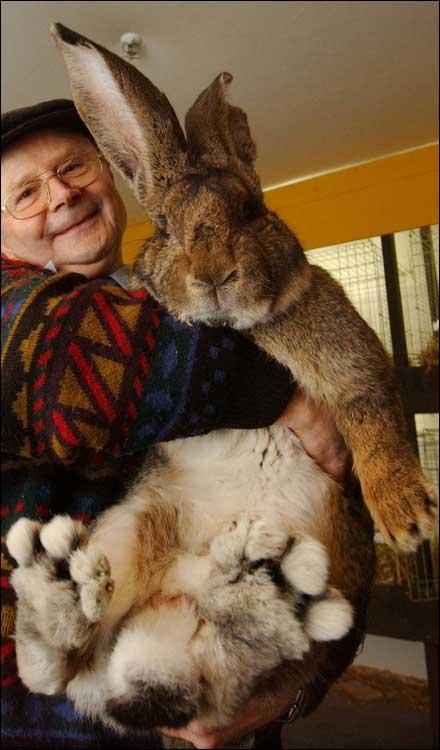 اكبر ارنب بالعالم  25975_01244818267
