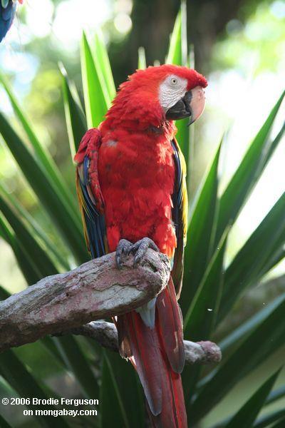 جميل معروف بألوانه الزاهية التي تتراوح بين الأخضر والأحمر والأزرق