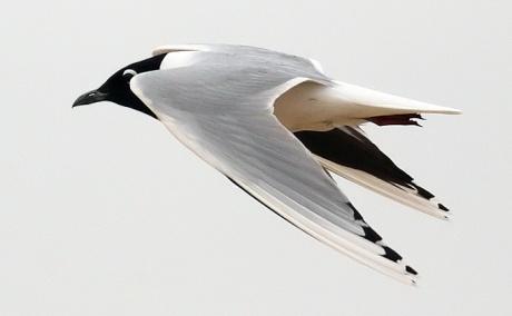 Saunders-Gull_TE-01