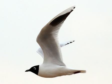 Saunders-Gull_TE-03