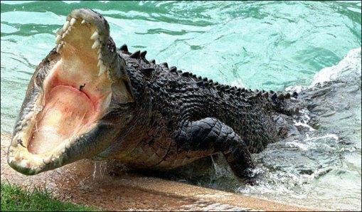 معلومات التمساح مرعب 6663.jpg?w=509&h