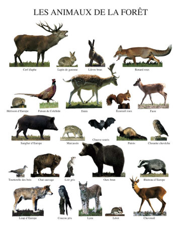 ������� ������.. ��������� ���� ���� ������.. ������� �������.. forest-animals.jpg?w