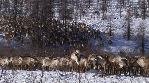القوقاز براري روسيا