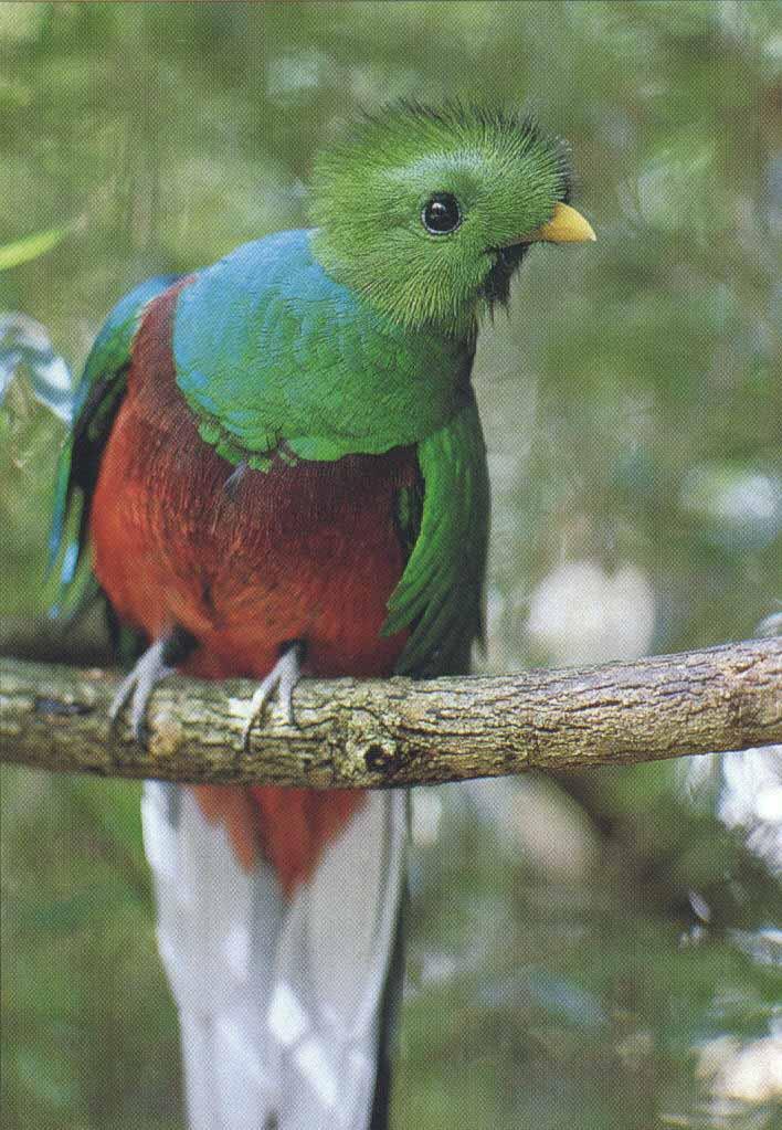 الفلسطيني quetzal.jpg