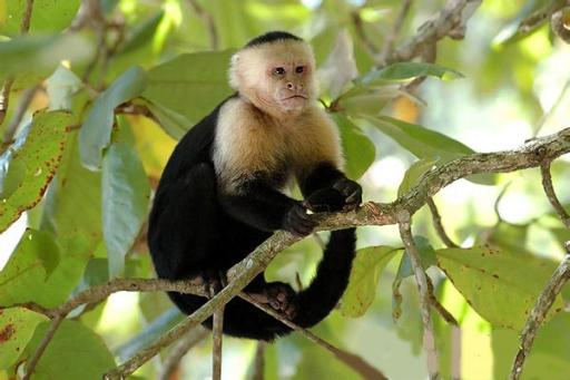 بعض انواع القرده الرائعه