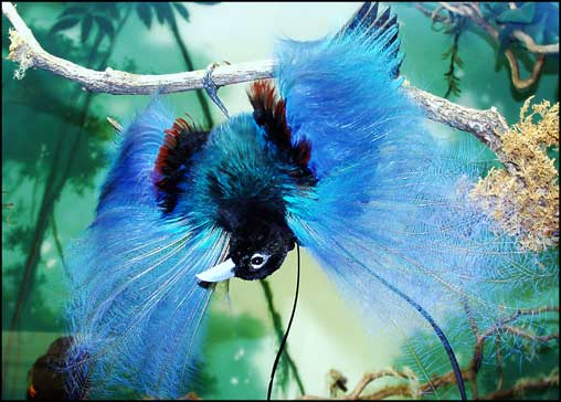 طيور الجنـــــــــة 109789-imgca.jpg?w=6