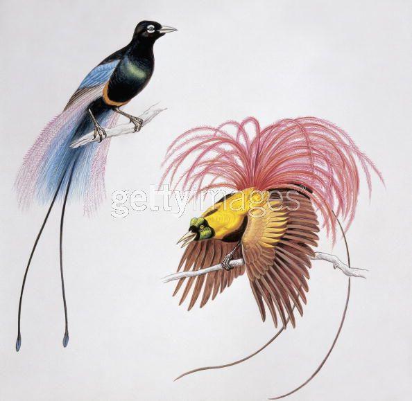 طيور الجنـــــــــة 89175005.jpg?w=640
