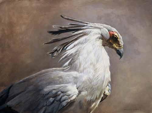 طائر الكاتب السكرتير secretarybird.jpg?w=