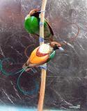طيور الجنـــــــــة th_magnificent0001.j