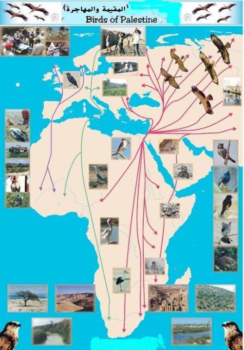حديقة حيوانات المركز الدولى  - صفحة 2 Image295