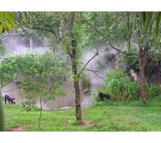 حديقة حيوانات المركز الدولى  - صفحة 4 1316287-ragunan_zoo-jakarta