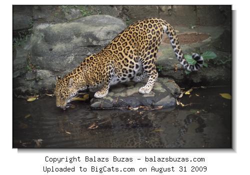 حديقة حيوانات المركز الدولى  - صفحة 4 464c426c4e96e6ed2b662f85a3d17737-png