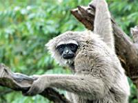 حديقة حيوانات المركز الدولى  - صفحة 4 Attraction_ragunan