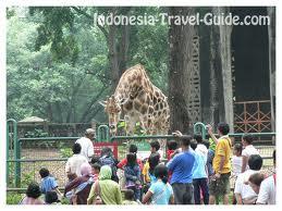 حديقة حيوانات المركز الدولى  - صفحة 4 Images9