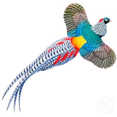 حديقة حيوانات المركز الدولى  - صفحة 4 Lady_amherst_pheasant_ornament_photosculpture-p1533923381117322653ppq_400