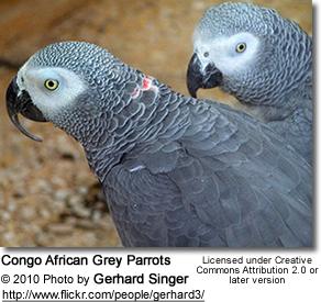 حديقة حيوانات المركز الدولى  - صفحة 4 Cags