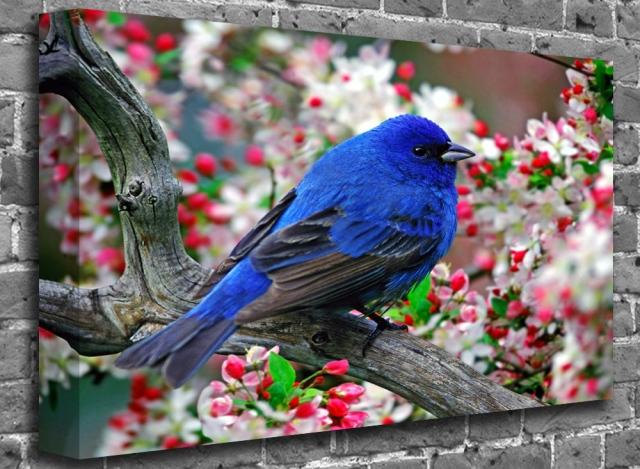 الروبن الهندي الازرق الطائر الصغير الروبن الهندي الازرق صور الروبن nature0291.jpg?w=640