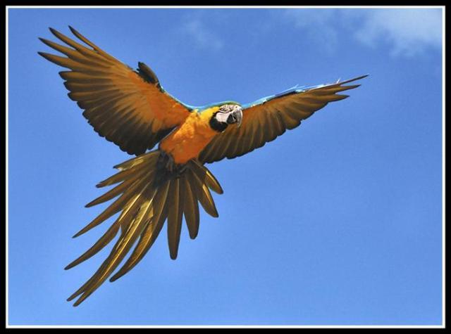 اجمل الطيور