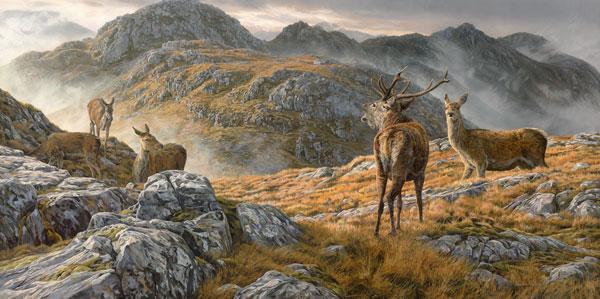 الأيل الأحمر roaring_red-deer-sta