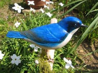 الروبن الهندي الازرق الطائر الصغير الروبن الهندي الازرق صور الروبن siberian-blue-bird-0
