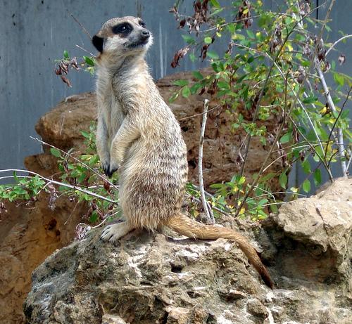 حديقة حيوانات المركز الدولى  - صفحة 4 3846811494_e285d352e7