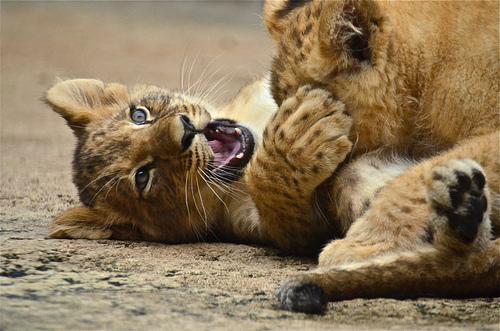 حديقة حيوانات المركز الدولى  - صفحة 4 6271171637_cc93afeb1f