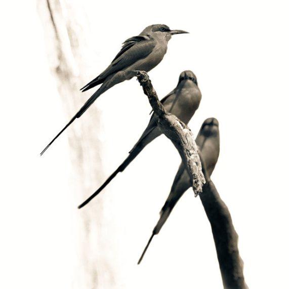 ��� ������� ���� ����� ����� ��� � ��� ���� ����� ��������� � ��� ���� ����� ��������� ���� birds.jpg?w=571&h=571