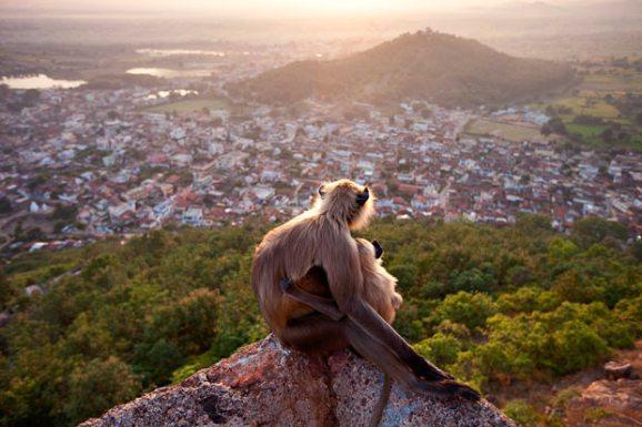 حديقة حيوانات المركز الدولى  - صفحة 4 Copy-of-baboons_1729788i