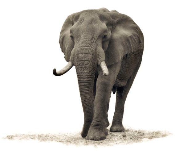 ��� ������� ���� ����� ����� ��� � ��� ���� ����� ��������� � ��� ���� ����� ��������� ���� elephant.jpg?w=568&h=503