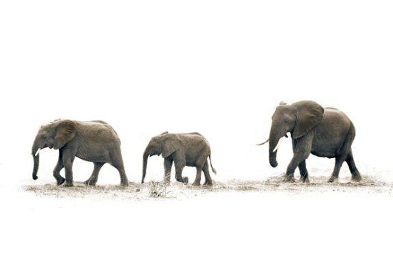 ��� ������� ���� ����� ����� ��� � ��� ���� ����� ��������� � ��� ���� ����� ��������� ���� elephants.jpg?w=575&h=382