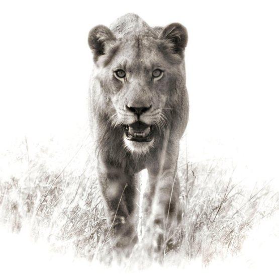 ��� ������� ���� ����� ����� ��� � ��� ���� ����� ��������� � ��� ���� ����� ��������� ���� lion.jpg?w=555&h=555