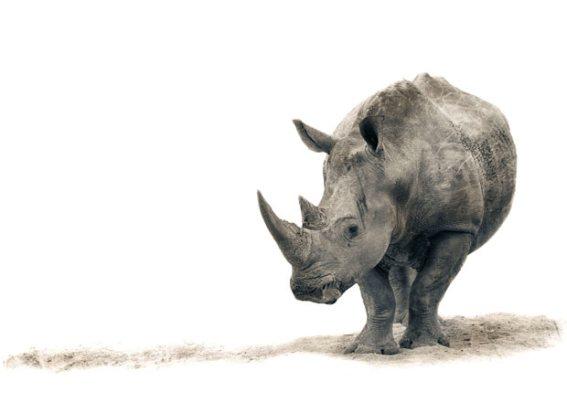 ��� ������� ���� ����� ����� ��� � ��� ���� ����� ��������� � ��� ���� ����� ��������� ���� rhino.jpg?w=567&h=425
