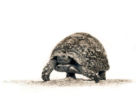 ��� ������� ���� ����� ����� ��� � ��� ���� ����� ��������� � ��� ���� ����� ��������� ���� tortoise_2105014i.jpg?w=568&h=431