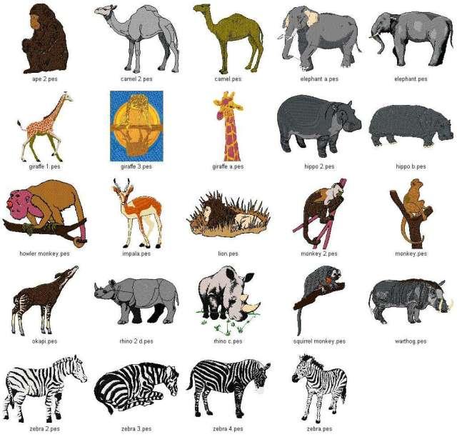 اصناف الحيوان | عالم الحيوان... Animalsmore - photo#1