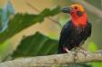 طيور جزيرة بورنيو
