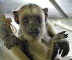 حديقة حيوان بوفالو