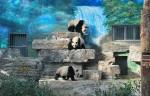 حديقة الحيوان بكين