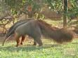 حديقة حيوان برازيليا
