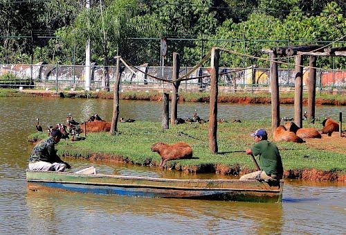 صور من حديقة حيوان برازيليا في 75923916.jpg?w=640