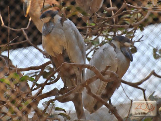 صور من حديقة حيوان برازيليا في arapapa.jpg?w=640