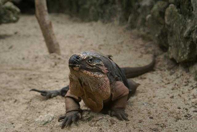 Ardastra_Gardens__Zoo_and_Conservation_Centre-Nassau-Bahamas-8e842b58d535446db74825f16dd0e57a_c