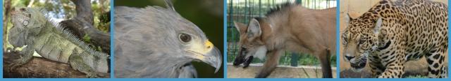 صور من حديقة حيوان برازيليا في banner_topo.jpg?w=64