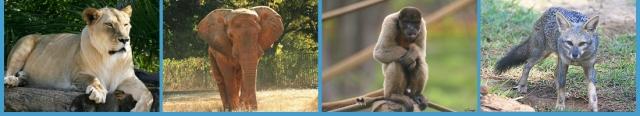 صور من حديقة حيوان برازيليا في banner_topo_004.jpg?