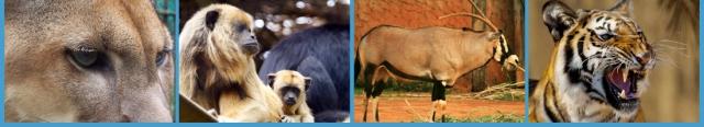 صور من حديقة حيوان برازيليا في banner_topo_005-1.jp