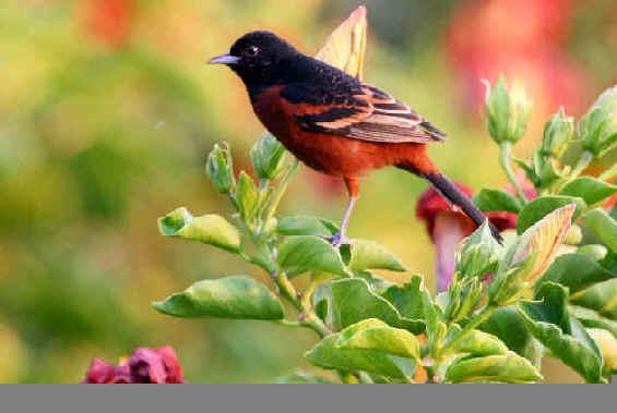 BirdLi512
