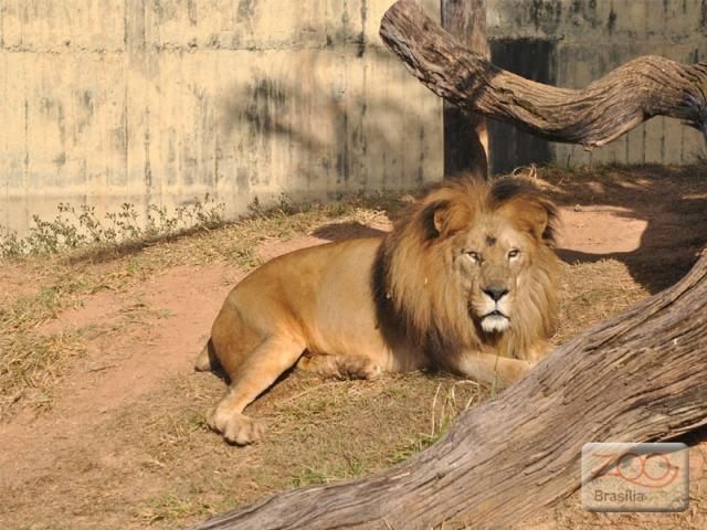 صور من حديقة حيوان برازيليا في imagem-01.jpg?w=640