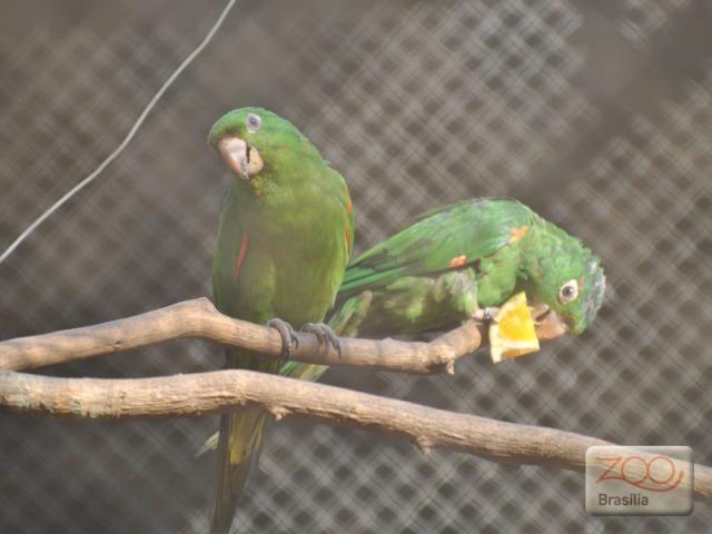 صور من حديقة حيوان برازيليا في imagem-02.jpg?w=640